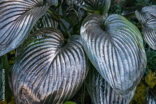 Srebny metal malował zielonych organicznie liście jako abstrakcjonistyczna kreatywnie sztuki tapeta lub tło dla projekta, zakończenie up