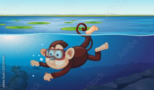 Fototapeta A monkey diving in the pond