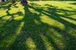 The shadow of the branches of the tree on the grass