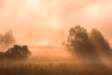 Magical autumn landscape with sun rays in the morning. Vintage landscapes. No effect filter. - 223530943