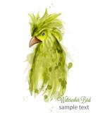 Parrot bird Vector watercolor. cartoon style illustrations