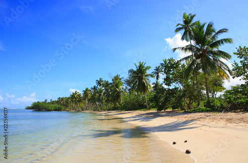 Palm trees on white tropical beach. Travel background.