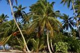 Beach of Filitheyo island - 223566742