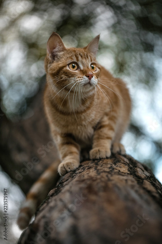 Red-haired kitten on a tree trunk.