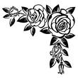 Corner of roses