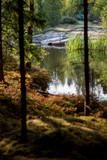 Ufer am Waldsee - 223578141