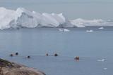 Greenland   Ilulisat - 223579975