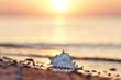 Leinwandbild Motiv Muschel am Strand - romantisch