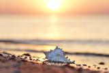 Muschel am Strand - romantisch - 223582384