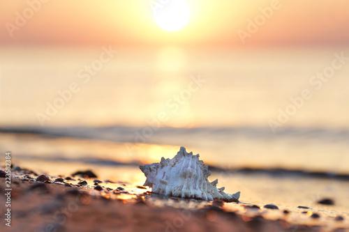 Leinwanddruck Bild Muschel am Strand - romantisch