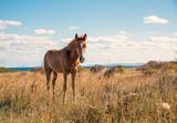 Beautifully young horses - 223608336