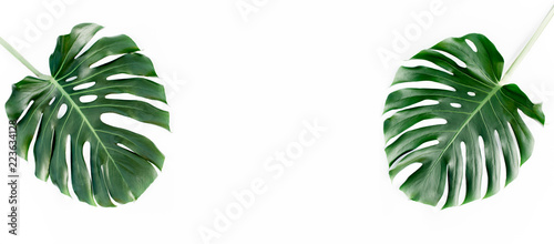 Tropical palm leaves Monstera with more space for text isolated on white background. Flat lay, top view