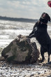 Dog standing on driftwood log at the beach licking face