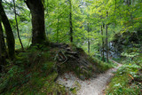 Naturparkwanderweg Ötschergräben - 223683505