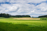 Germany, Green german perfect nature landscape of forest and pasture - 223685598