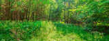 Landschaft Waldpanorama Waldlichtung junger Laubwald Mitteleuropa - Landscape forest panorama clearing young deciduous forest Central Europe - 223725536