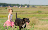 Amstaff Mix with little girl on running on meadow. - 223728378