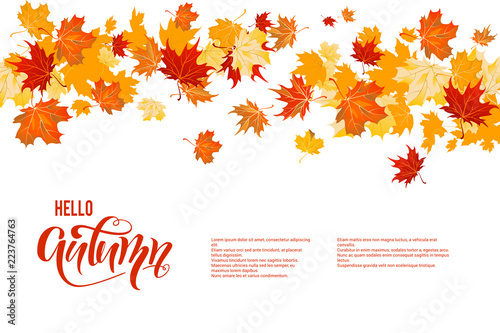 Autumn maple leaves decor - 223764763