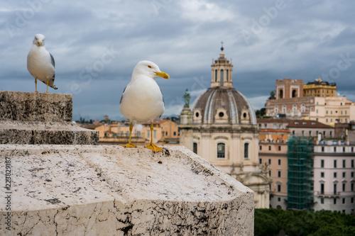 Seagulls w Rzym na dachu z budynkami w tle