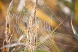 Spinnennetz - 223871520