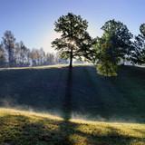 Wonderful morning landscape with tree. Sun rays pass through tree. Sunrise landscape with tree.  - 223885526