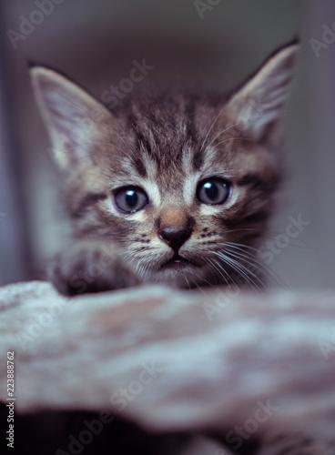 Mała urocza figlarka z niebieskimi oczami siedzi na drewnie