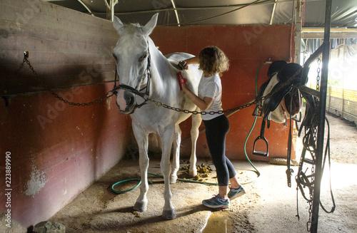 mała dziewczynka przygotowuje białego konia w stajni