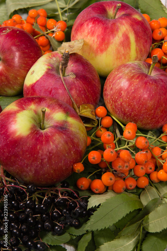 Autumn still life with red ripe apples, rowan berries and elderberries - 223903516