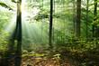 Beautiful sunrise in forest - 223939722