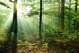 Fototapeta Las - Beautiful sunrise in forest © kwasny221