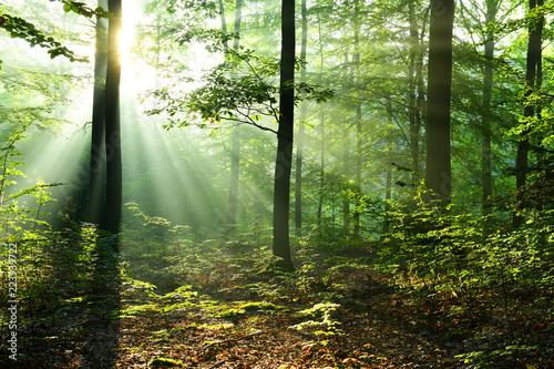Piękny wschód słońca w lesie