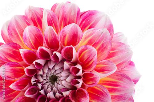 Aster flower head closeup - 223953536