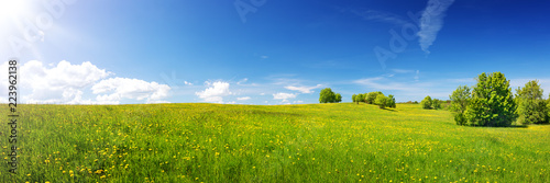 Leinwandbild Motiv Green field with yellow dandelions and blue sky. Panoramic view to grass and flowers on the hill on sunny spring day