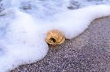 Seashell in the waves white foam - 223965513