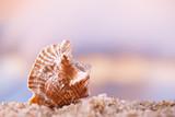 tropical seashell sea shell with ocean , beach and seascape - 223974765