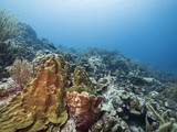 Seascape of coral reef / Caribbean Sea / Curacao with various hard and soft corals, sponges - 223980512