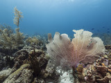 Seascape of coral reef / Caribbean Sea / Curacao with sea fan, various hard and soft corals, sponges - 223980532