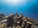 Seascape of coral reef / Caribbean Sea / Curacao with pillar coral, various hard and soft corals, sponges - 223980550