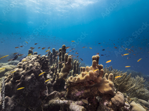 Foto Murales Seascape of coral reef / Caribbean Sea / Curacao with pillar coral, various hard and soft corals, sponges