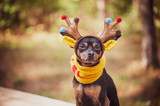 Dogs in deer costume, Autumn mood, fantastic deer dog