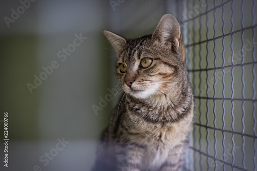 Abandoned cat in cage. Pet adoption - 224000766