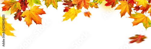 Leinwandbild Motiv Herbst Rahmen mit bunten Ahornblättern auf weiß, Panorama Format