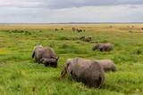 Elephants in Kenya, Africa - 224049340