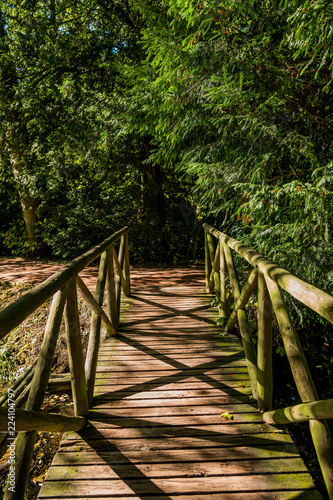 forest trail baddesley clinton stately home - 224104797