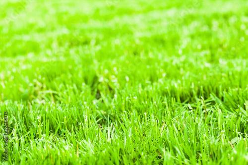 Bright green fresh grass background photo - 224116715