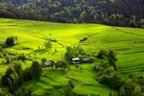 wiosna w Pieninach - 224141157