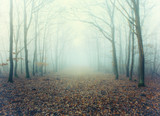 Mystic foggy forest alley with bare trees and fallen leaves - 224160728