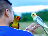 macore bird Beautiful bird parrot playing with pet care on catching shoulder.
