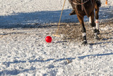 Polo game in winter - 224163521