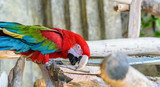 portrait of a red parrot in a zoo